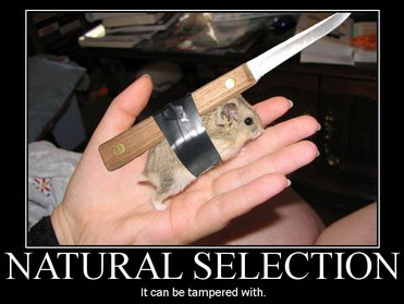 natural-selection1